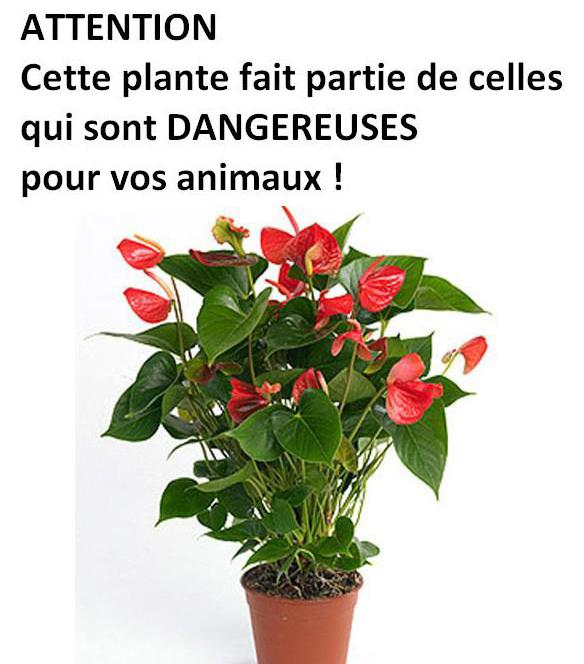 Conseils for Plante toxique chien