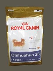 Vign_chihuahua_2
